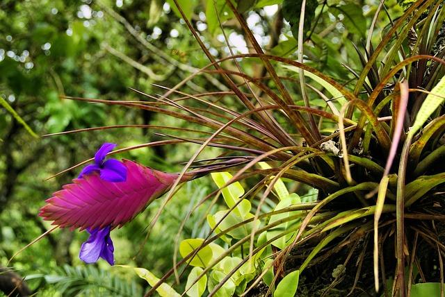 tropická rostlina