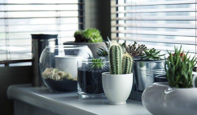 kaktusy v nádobách.jpg