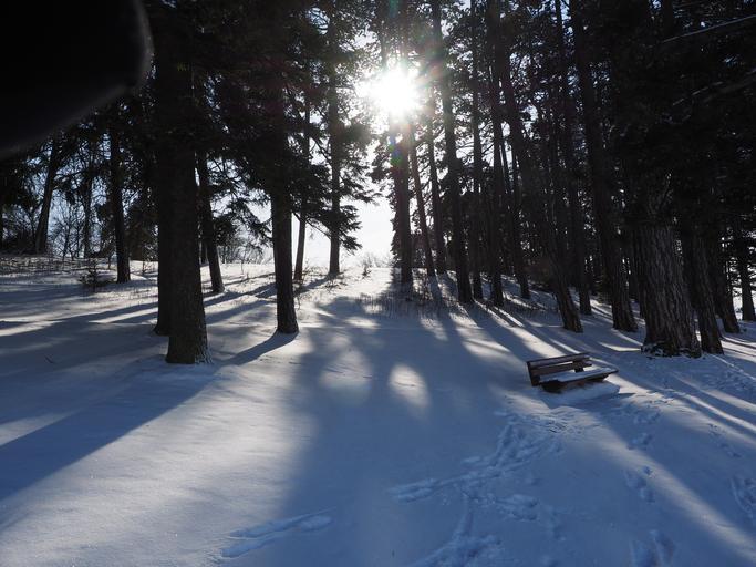 zasněžený les, v něm zasněžená lavička